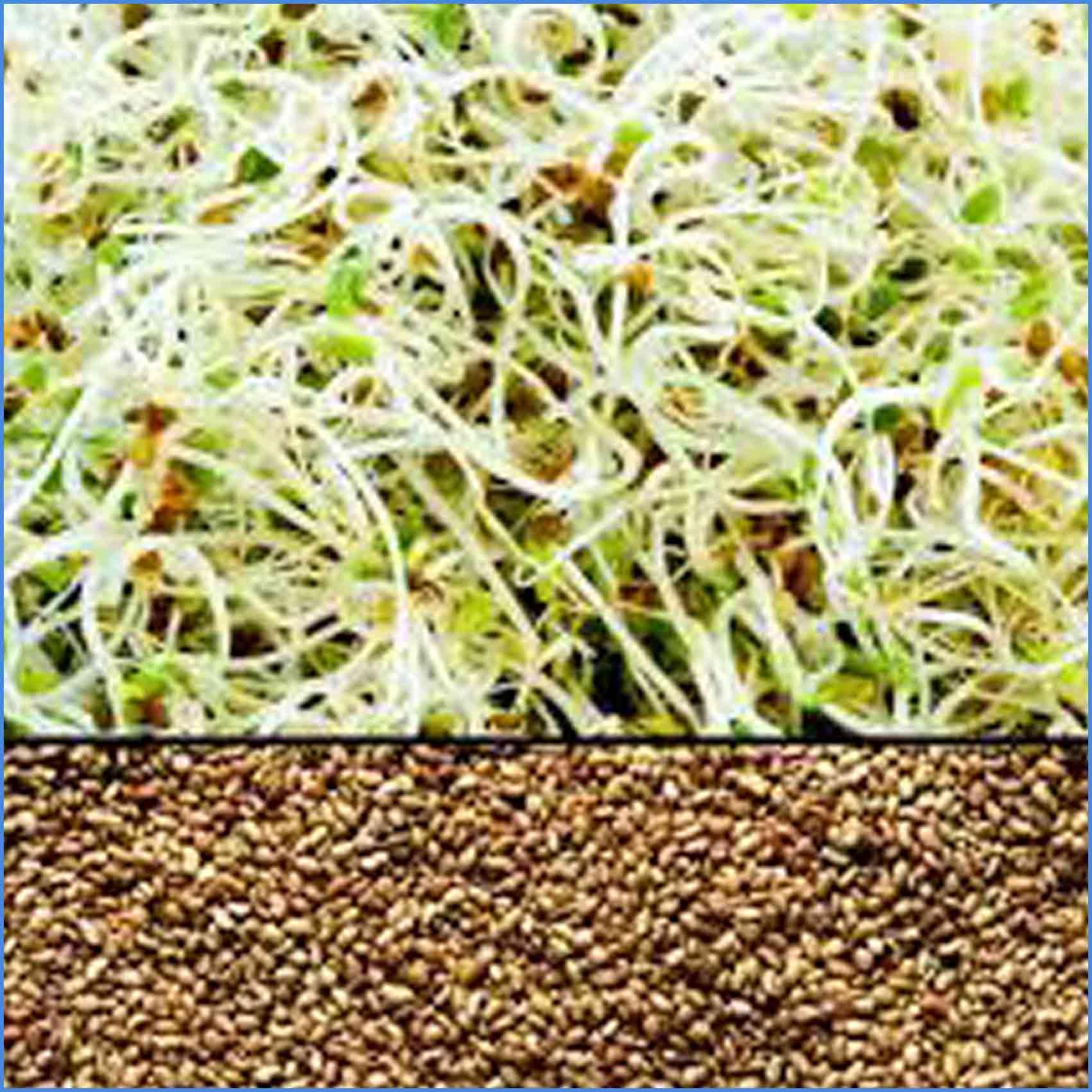 Alfalfa Seed 250g Certified Organic