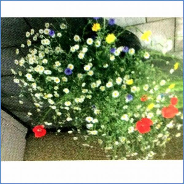 Bee Bomb Flowers