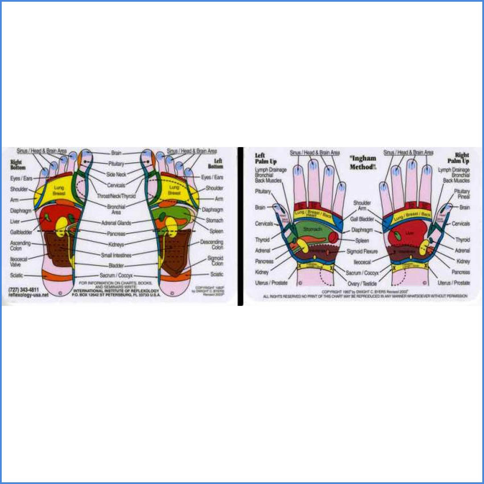 Hand and Foot Wallet Reflexology Chart